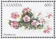 Stamp, Dianthus sp., Uganda,  , Flowers, Plants (Flora)